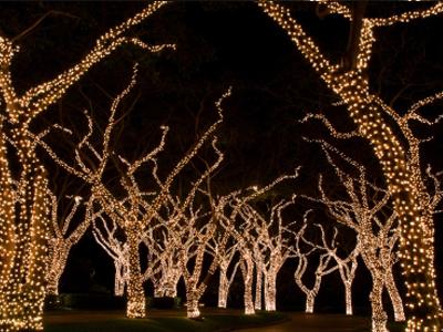 Mr Christmas Lights | Christmas Lights for the Greater Miami