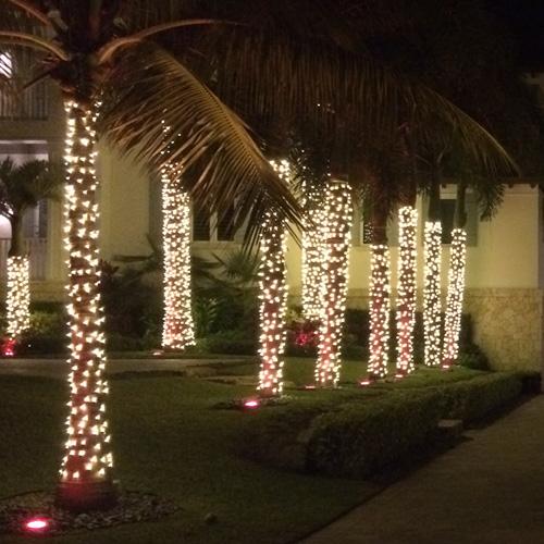 large roya palm - Palm Tree Christmas Lights